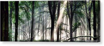 Deep Forest Morning Light Canvas Print by Simon Bratt Photography LRPS