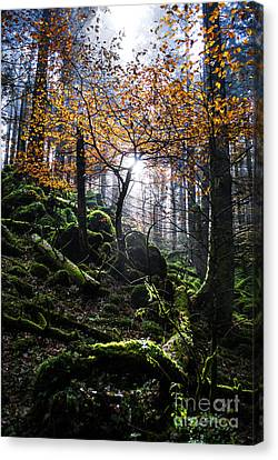 Deep Forest Canvas Print by Yuri Santin