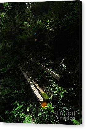 Deep In The Woods Canvas Print by Andy Prendy