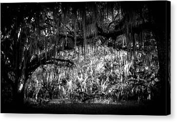 Deep In The Woods Canvas Print by Christy Usilton