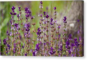 Canvas Print featuring the photograph Deep Purple by Uri Baruch