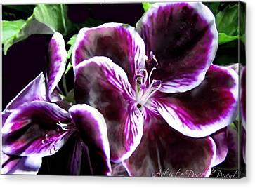 Deep Purple Vibrant Flower Macro Canvas Print by Danielle  Parent