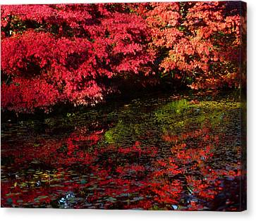 Deep Reflections Canvas Print by Connie Handscomb