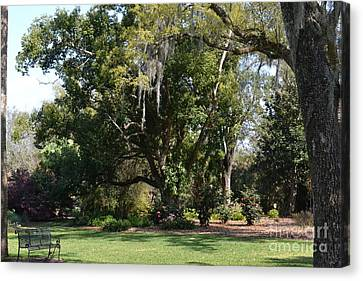 Canvas Print featuring the photograph Deep South Scenery by Carol  Bradley