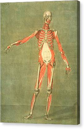 Deeper Muscular System Of The Front Canvas Print by Arnauld Eloi Gautier D'Agoty