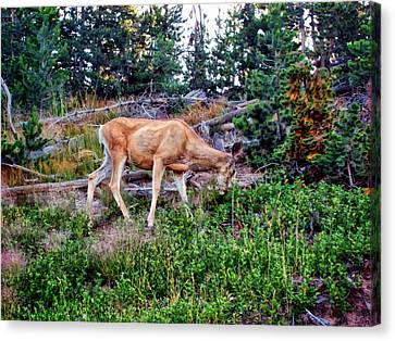 Canvas Print featuring the photograph Deer 1 by Dawn Eshelman