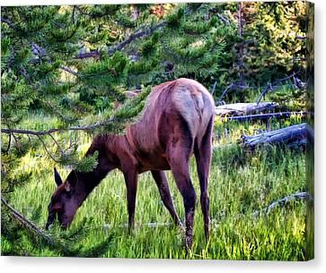 Canvas Print featuring the photograph Deer 7 by Dawn Eshelman