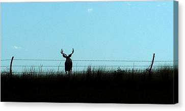 Canvas Print featuring the photograph Ohhhh Deer by Shirley Heier