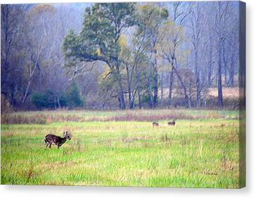 Deer At Cades Cove Canvas Print by Kenny Francis