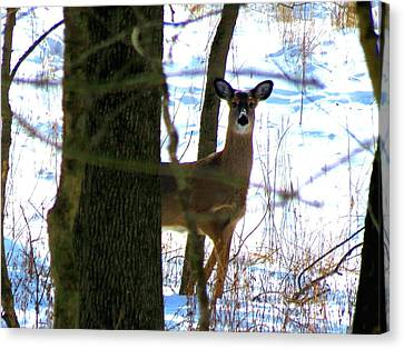 Canvas Print featuring the photograph Deer At Park by Eric Switzer