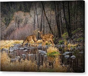 Deer Crossing Canvas Print by Randall Nyhof
