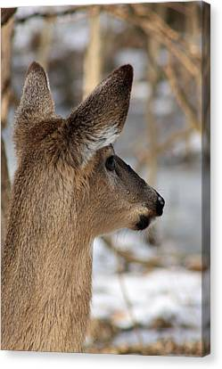 Deer Day Dreamer Canvas Print by Lorna Rogers Photography