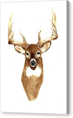 Deer - Front View Canvas Print by Michael Vigliotti