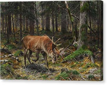 Miners Ghost Canvas Print - Deer In A Forest Glade by Celestial Images