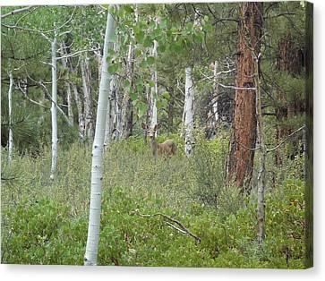 Deer In Forest Canvas Print by Deborah Moen