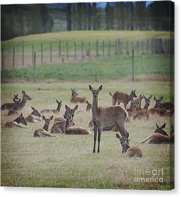 Deer In Grass Canvas Print
