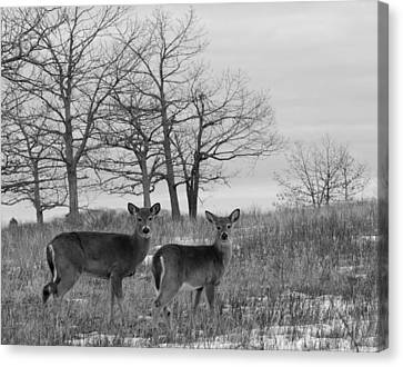 Brian Rock Canvas Print - Deer In Meadow by Brian Rock