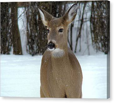 Deer In Snow Canvas Print by Gothicrow Images