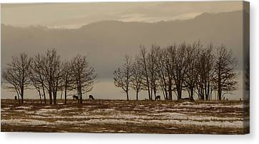Brian Rock Canvas Print - Deer In The Meadows by Brian Rock