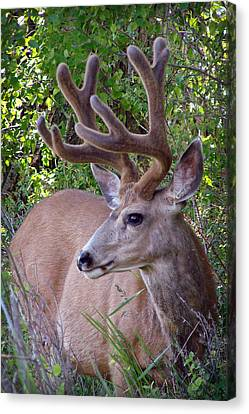 Canvas Print featuring the photograph Buck In The Woods by Athena Mckinzie