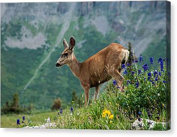Deer Canvas Print by Jay Stockhaus