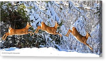 Deer Jump Canvas Print