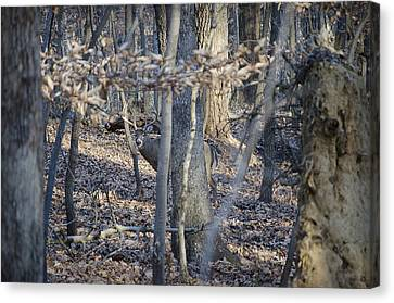 Canvas Print featuring the photograph Deer by Michael Donahue