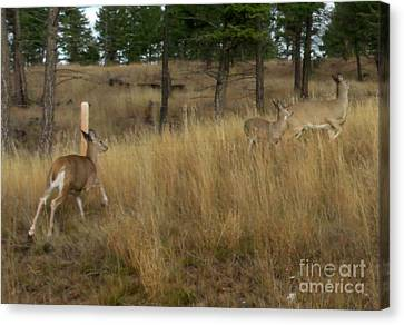 Deer On The Run Canvas Print