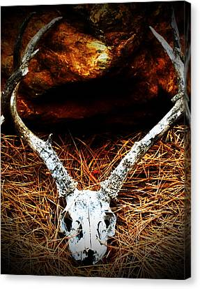 Deer Skull Canvas Print by Christina Ochsner