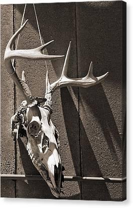 Deer Skull In Sepia Canvas Print by Brooke T Ryan