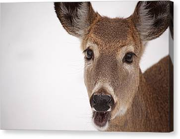 Deer Talk Canvas Print