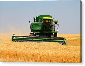 Deere Field Canvas Print by Jason Drake