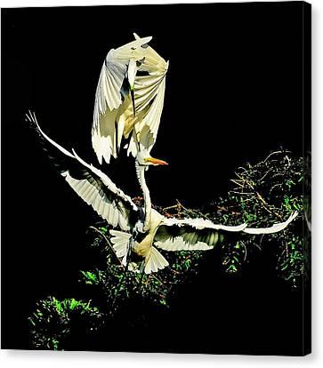 Defending The Nest Canvas Print by Stuart Harrison