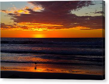 Del Mar Sunset Canvas Print by Randy Bayne