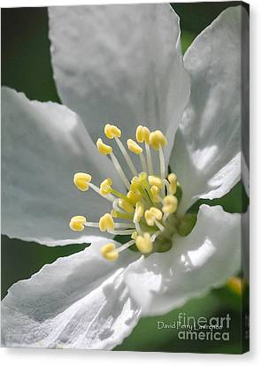 Delcate Widflower With Beautiful Stamen Canvas Print