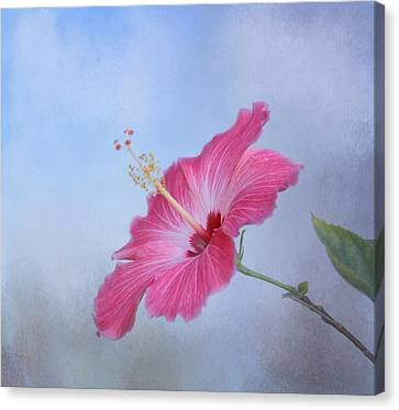 Delicate Beauty Canvas Print by Kim Hojnacki