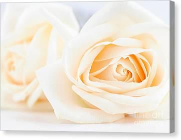 Delicate Beige Roses Canvas Print by Elena Elisseeva