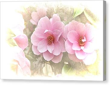 Delicate Camellias Canvas Print by Michelle Orai