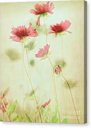 Delicate Dance Canvas Print