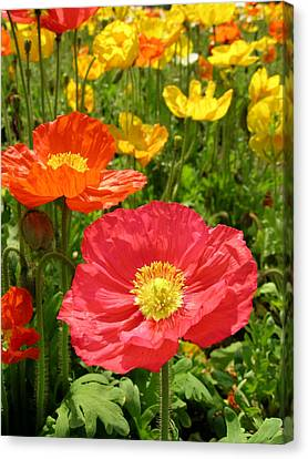 Delicate Fowers Canvas Print by Pat Knieff