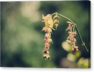 Delicate Canvas Print by Heather Applegate