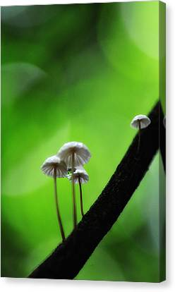 Delicate Mushrooms Canvas Print by Heather Bridenstine