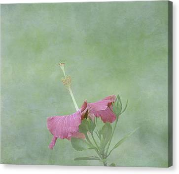 Delicate Pink Hibiscus Flower Canvas Print