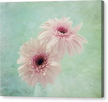 Flowers Gerbera Canvas Print - Delicate Pinks by Kim Hojnacki
