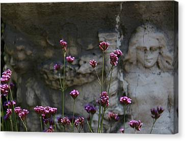 Delicate Pinks Canvas Print by Yvonne Wright