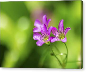 Delicate Purple Wildflowers Canvas Print