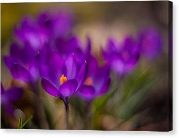 Delicate Purples Canvas Print by Mike Reid