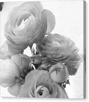 Delicate Canvas Print - Delicate Ranunculus by Heather L Wright