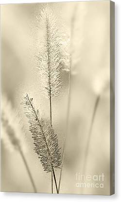 Delicate Sweetgrass Canvas Print by Heiko Koehrer-Wagner
