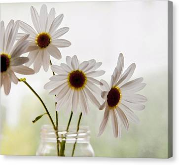 Delicate Canvas Print by Terri Harper